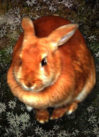 kitch-rabbit