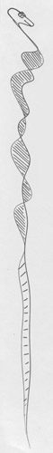 juusola-doodles-01-07-406