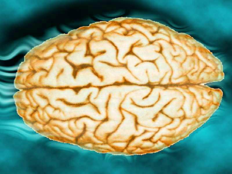 brain3b